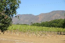 mexico2004_dag2_wijngaard1