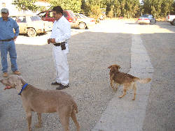 mexico2004_dag4_hond2