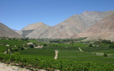 Summit 2021 Wines of Chile